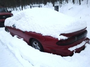 Firebird in Snow